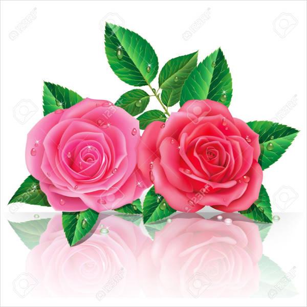 beautiful pink rose vector