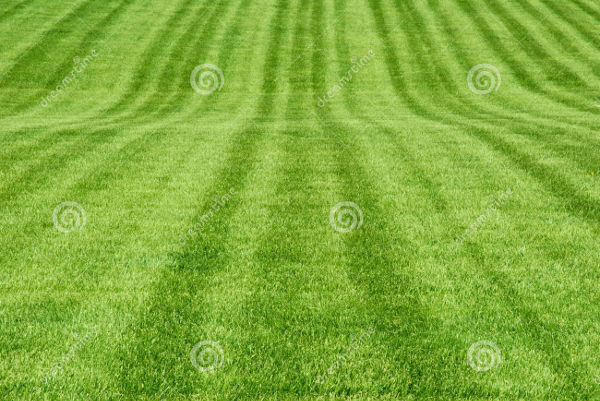 free green grass patterns