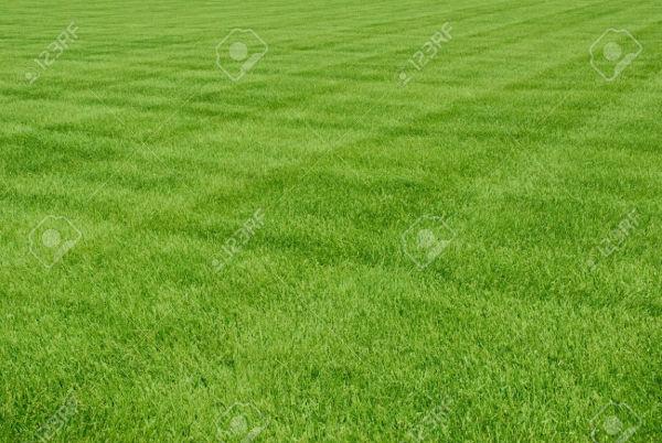free printable grass patterns