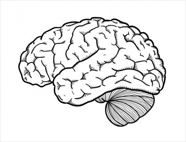 hand drawn brain vector