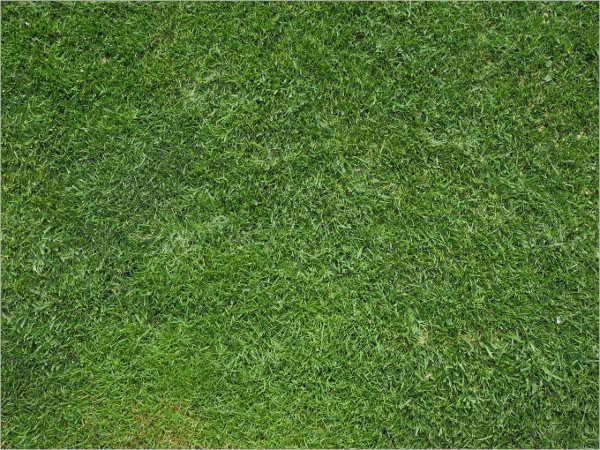 pattern grass texture template
