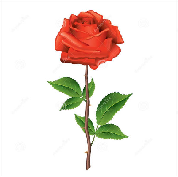 red rose vector illustration