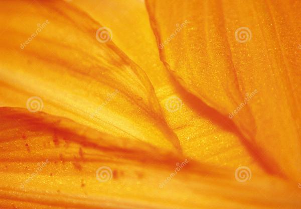 texture flower petals